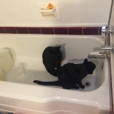 katz drinking in tub