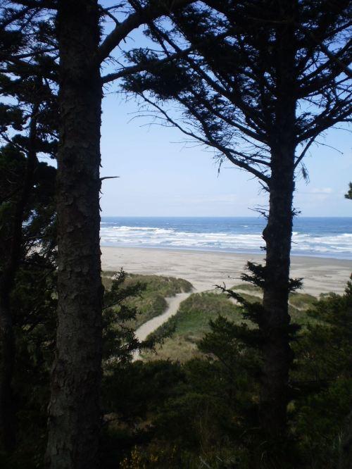 ocean view between two trees