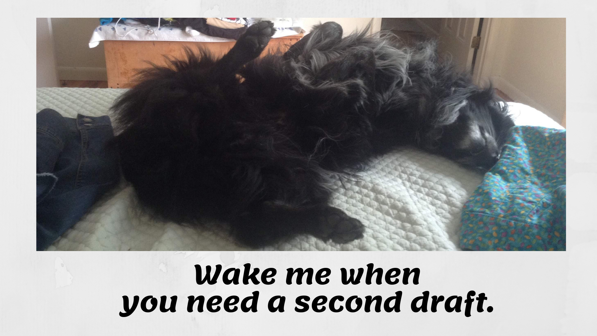 black dog writing poster 'wake me when you need a second draft'