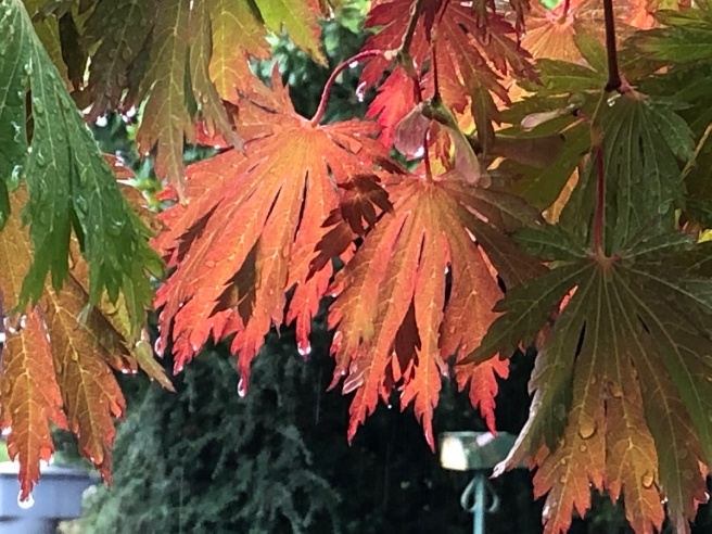 Rain soaked leaves with fall colors [orange and tan]