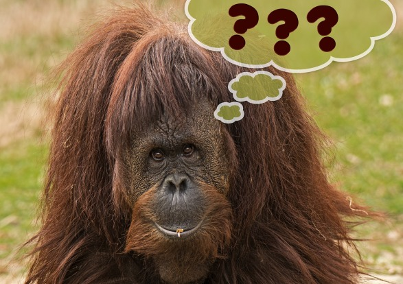 ape with question marks