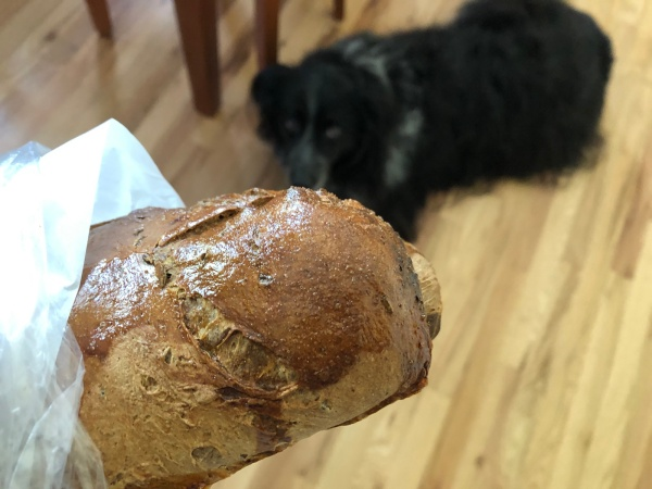 loaf of bread with dog eyeing it