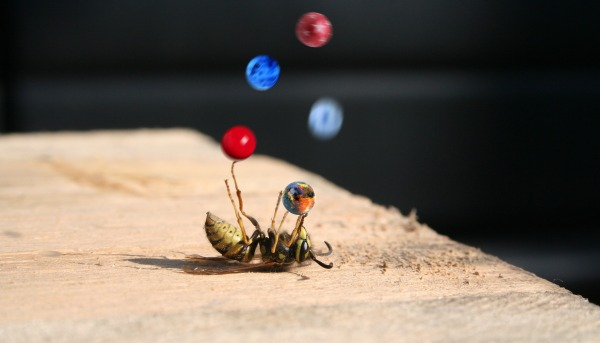 bee juggling marbles